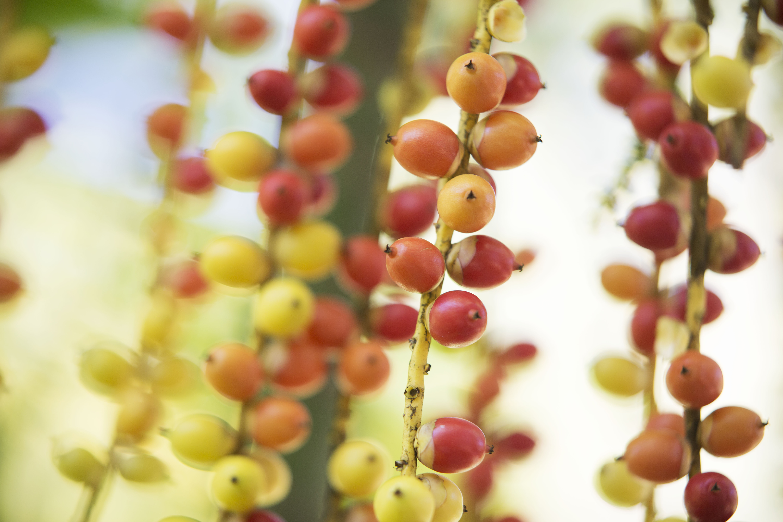 2014_LankaPrincess_Fruits_2